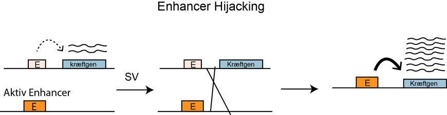 Enhancer Hijacking